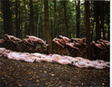 spencer tunick 2004 milford PA