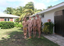 nudist resort 7